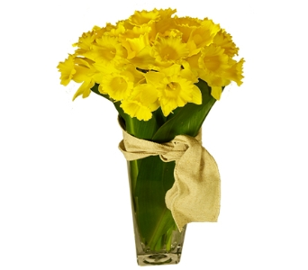 Delightful Daffodil in Little Rock AR, Tipton & Hurst, Inc.