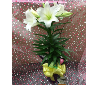 Easter Lily in Orleans ON, Flower Mania