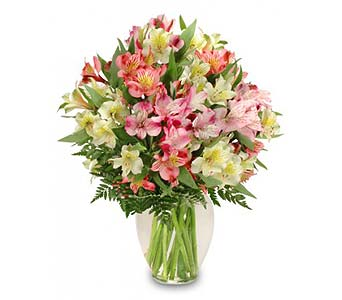 FF147 Alluring Alstroemeria in Oklahoma City OK, Array of Flowers & Gifts