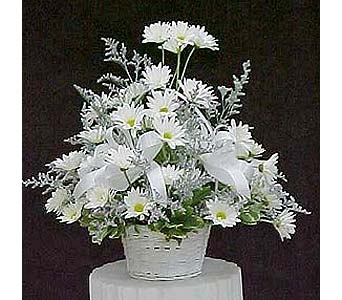 Fresh Cut Colonial Daisy Arrangement in Huntington WV, Spurlock's Flowers & Greenhouses, Inc.