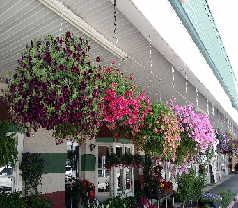 Blooming Hanging Basket in Bristol TN, Misty's Florist & Greenhouse Inc.