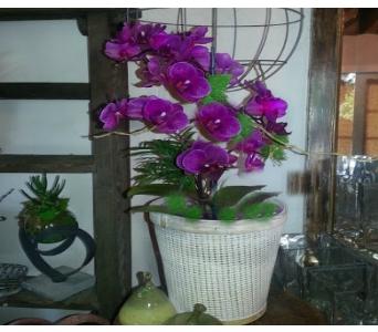 Local Farm Orchid Plant in Orinda CA, Misaghi Design Orinda Florist