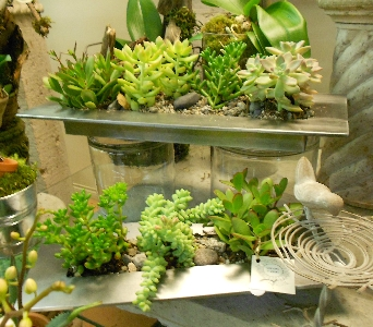 Succulent Tray in Gibsons BC, Gibsons Florist, Ltd.