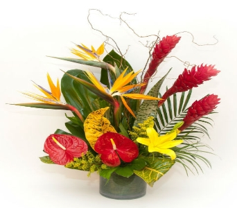 Tropical Princess  in Hollywood FL, Al's Florist & Gifts