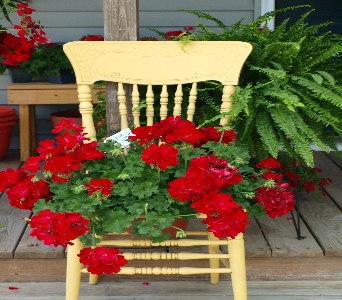 YellowChair_flowers in Oakland City IN, Sue's Flowers & Gifts