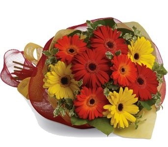 Mixed Gerberas in Halifax NS, TL Yorke Floral Design