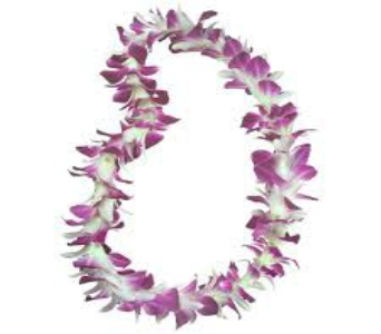 Single Bombay Orchid Lei in Santa Monica CA, Edelweiss Flower Boutique