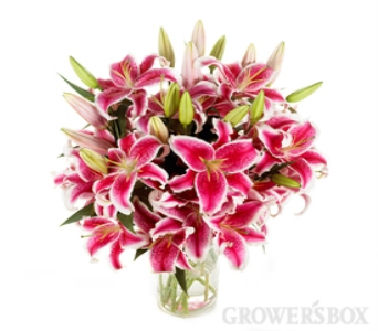 Stargazer Lillies in Fond Du Lac WI, Haentze Floral Co
