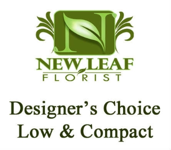 Designer''s Choice - Nosegay in Oklahoma City OK, New Leaf Floral Inc