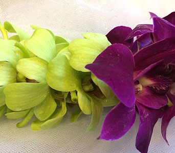 Purple, Green - Double Lei in Sunnyvale CA, Flowers By Sophia