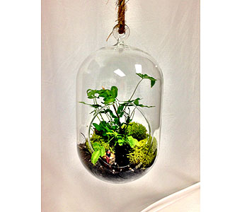 Capsule Hanging Terrarium in Greeley CO, Mariposa Plants & Flowers