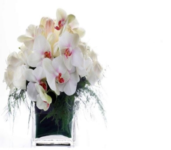 White Elegance in Los Angeles CA, Century City Flower Mart