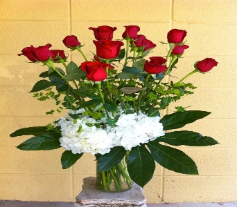 Dozen Red Roses in Novato CA, Natalie & Daria's Flowers & Gifts
