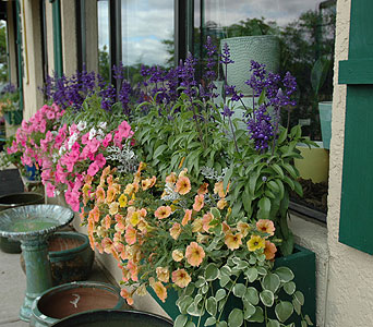 FMN-BP011 in Northfield MN, Forget-Me-Not Florist