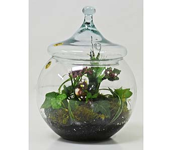 Collegiate Terrarium in Indianapolis IN, Gillespie Florists