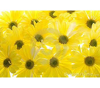 Flower Market Special - Yellow Daisies in Timmins ON, Timmins Flower Shop Inc.