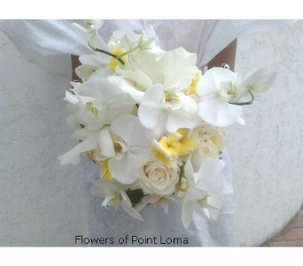 White in San Diego CA, Flowers Of Point Loma
