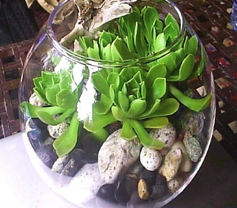 Succulent Bubble Bowl in Gibsons BC, Gibsons Florist, Ltd.
