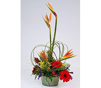 Makua in Indianapolis IN, Gillespie Florists