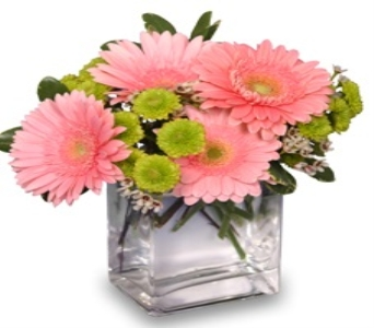 Gerbera Fun in Glendale AZ, Blooming Bouquets