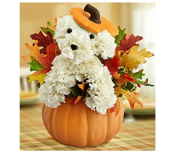 Pumpkin Patch Pup in Bradenton FL, Ms. Scarlett's Flowers & Gifts
