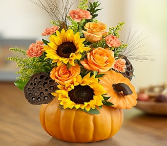Pumpkin n� Posies in Round Rock TX, Heart & Home Flowers