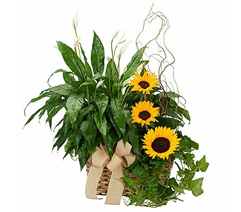 Plants and Sunshine in Mattoon IL, Lake Land Florals & Gifts