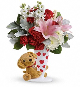 Send a Hug You're Fur Me by Teleflora in Vienna VA, Caffi's Florist