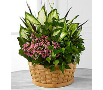 Breath of Fresh Air Dish Garden in Branford CT, Myers Flower Shop