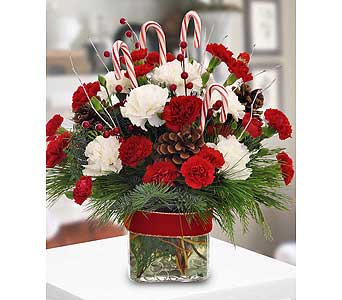 Candy Cane Celebration by Hoogasian Flowers in San Francisco CA, Hoogasian Flowers