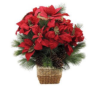 Natural Poinsettia in Amherst NY, The Trillium's Courtyard Florist