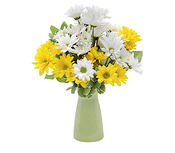 Daisy Craisy in Raleigh NC, North Raleigh Florist