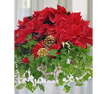 Poinsettia & Ivy Garden Basket by Hoogasian Flower in San Francisco CA, Hoogasian Flowers