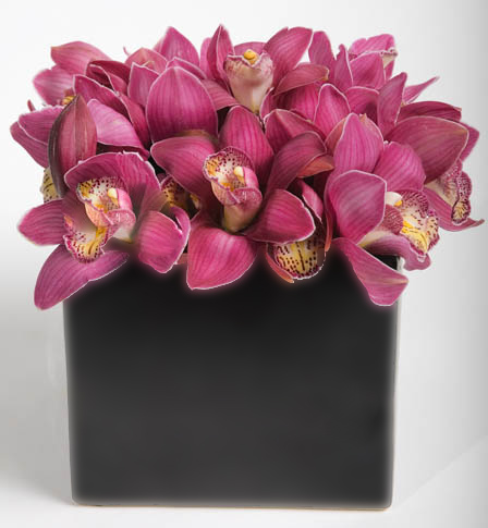 ORCHID ALL AROUND BOUQUET in Vienna VA, Vienna Florist & Gifts