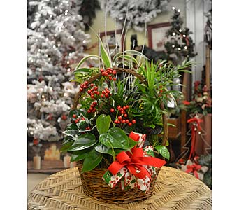 Christmas Dish Garden in Utica NY, Chester's Flower Shop And Greenhouses