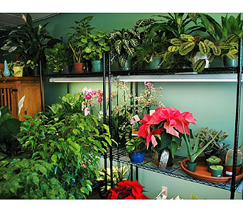 plant shelf in Northfield MN, Forget-Me-Not Florist