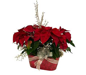 Custom-Decorated Double Poinsettia in Tin in Dearborn Heights MI, English Gardens