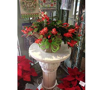 Christmas Cactus in Creedmoor NC, Gil-Man Florist Inc.