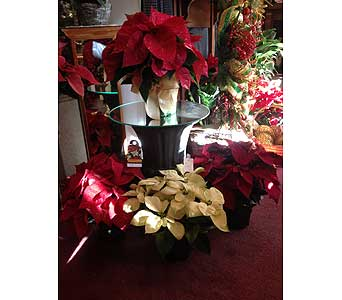 Christmas Poinsettia in Creedmoor NC, Gil-Man Florist Inc.