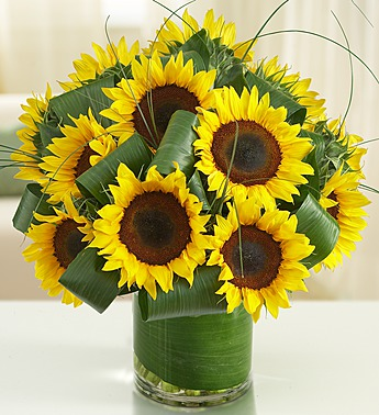Summer sunflowers in Princeton NJ, Perna's Plant and Flower Shop, Inc