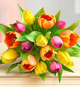 Wrapped Tulips in Corning NY, House Of Flowers