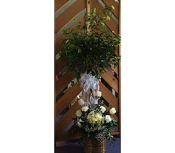 Ficus Tree in Statesville NC, Brookdale Florist, LLC