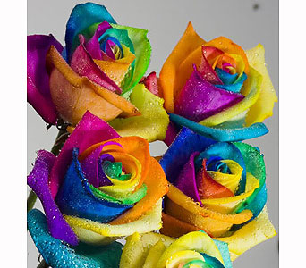 RAINBOW ROSES in Barrie ON, The Flower Place