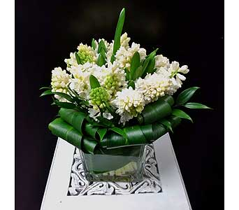 Hyacinth in Thornhill ON, Orchid Florist