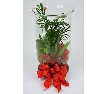 Rejuvenate Terrarium in Indianapolis IN, Gillespie Florists