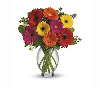 Teleflora's Gerbera Brights in Littleton CO, Cindy's Floral