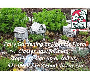 Fairy Garden Class in Fond Du Lac WI, Haentze Floral Co