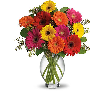 Gerbera Brights in Littleton CO, Littleton's Woodlawn Floral