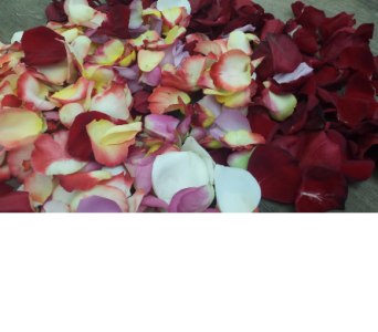 Rose Petals in Boston MA, Exotic Flowers