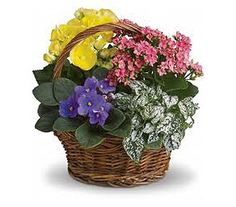 Spring Blooming Plant Basket in Grand-Sault/Grand Falls NB, Centre Floral de Grand-Sault Ltee